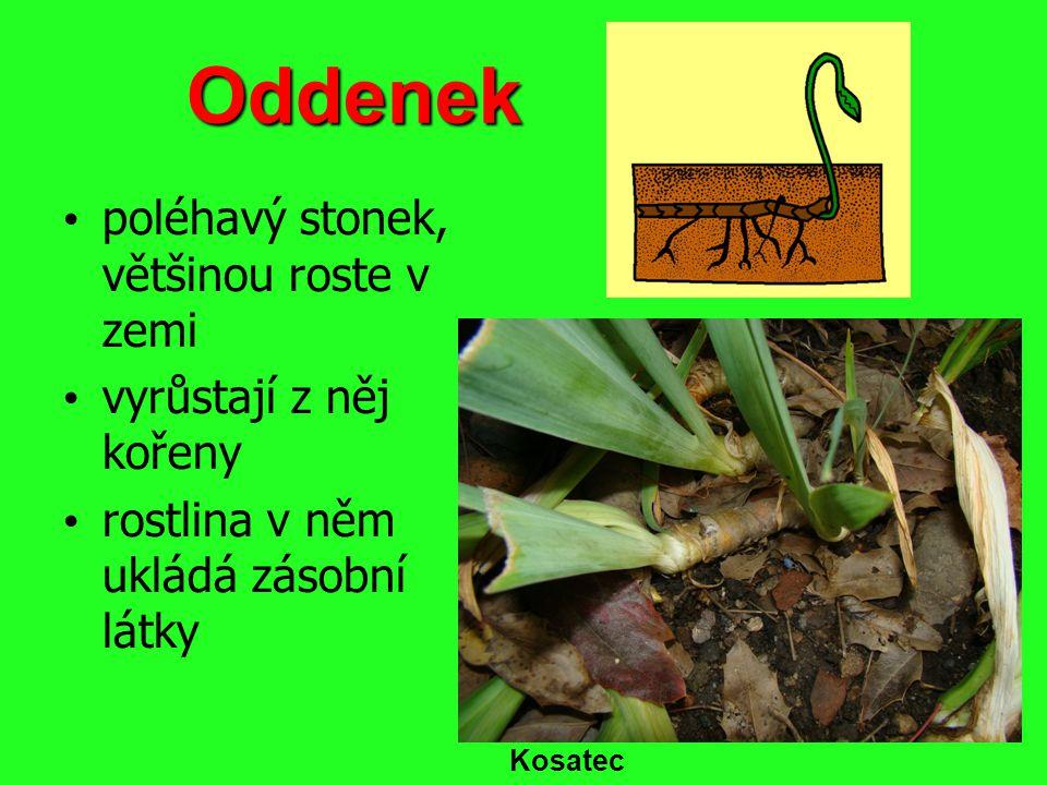 Stéblo dutý stonek s kolénky kolénko Pšenice