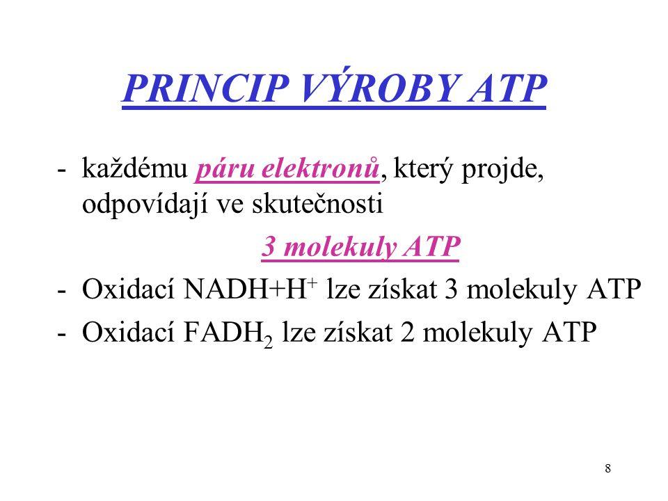 8 PRINCIP VÝROBY ATP -každému páru elektronů, který projde, odpovídají ve skutečnosti 3 molekuly ATP -Oxidací NADH+H + lze získat 3 molekuly ATP -Oxidací FADH 2 lze získat 2 molekuly ATP