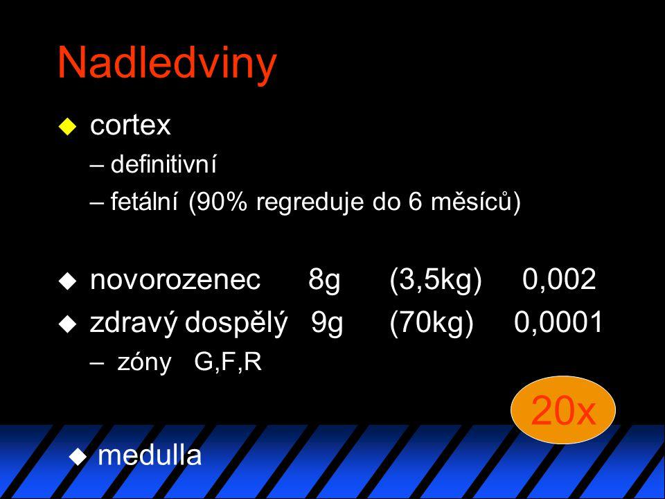 Nadledviny u cortex –definitivní –fetální (90% regreduje do 6 měsíců) u novorozenec 8g(3,5kg)0,002 u zdravý dospělý 9g(70kg) 0,0001 – zóny G,F,R 20x u medulla