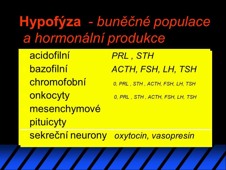 Hypofýza - buněčné populace a hormonální produkce u acidofilní PRL, STH u bazofilní ACTH, FSH, LH, TSH u chromofobní 0, PRL, STH, ACTH, FSH, LH, TSH u onkocyty 0, PRL, STH, ACTH, FSH, LH, TSH u mesenchymové u pituicyty u sekreční neurony oxytocin, vasopresin u acidofilní PRL, STH u bazofilní ACTH, FSH, LH, TSH u chromofobní 0, PRL, STH, ACTH, FSH, LH, TSH u onkocyty 0, PRL, STH, ACTH, FSH, LH, TSH u mesenchymové u pituicyty u sekreční neurony oxytocin, vasopresin