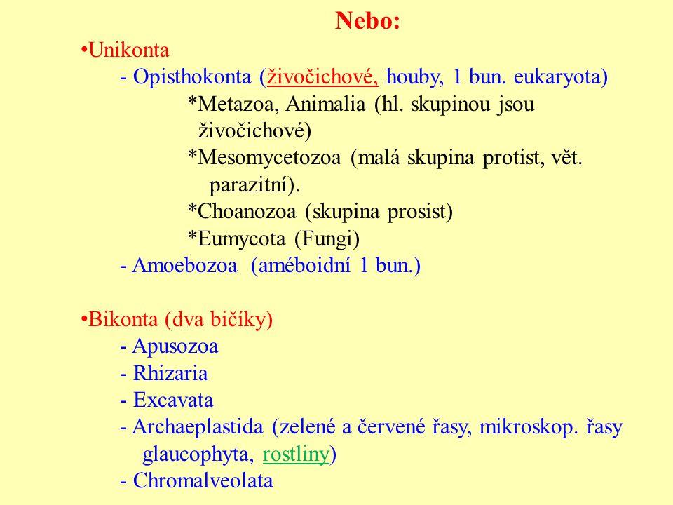 Nebo: Unikonta - Opisthokonta (živočichové, houby, 1 bun. eukaryota) *Metazoa, Animalia (hl. skupinou jsou živočichové) *Mesomycetozoa (malá skupina p