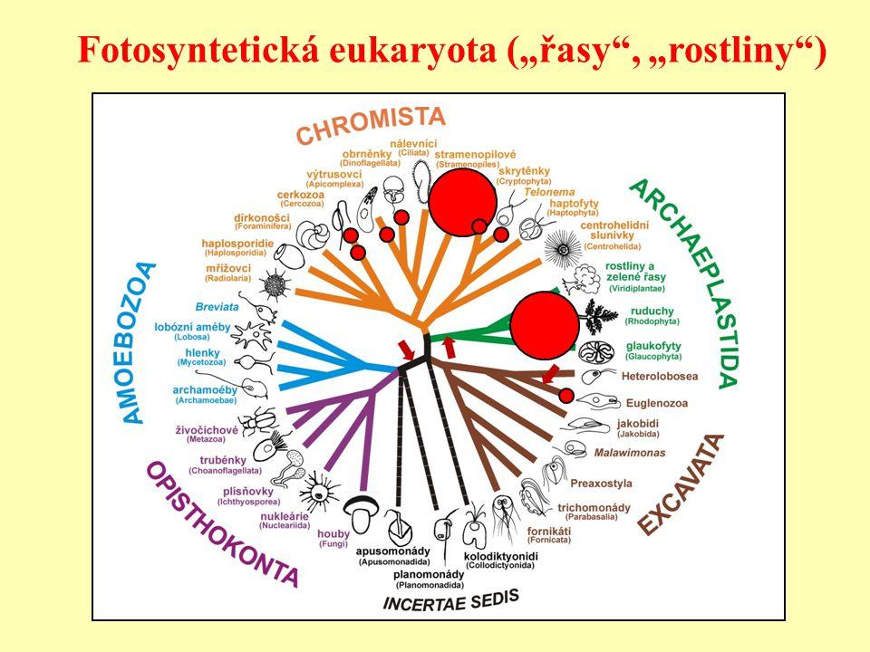 "Fotosyntetická eukaryota (""řasy"", ""rostliny"")"