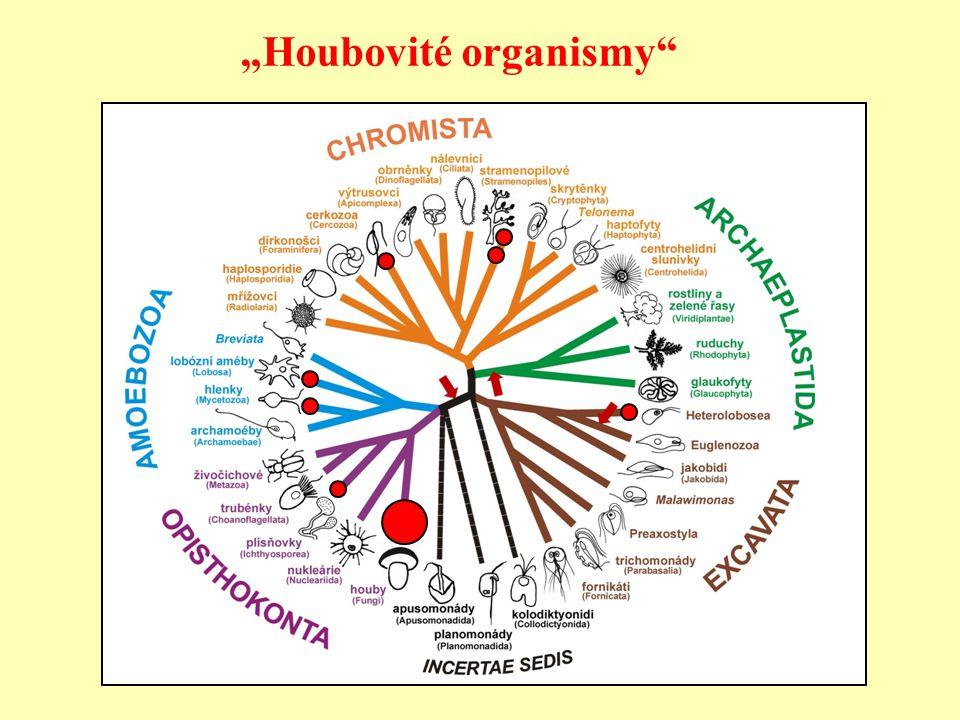 """Houbovité organismy"""