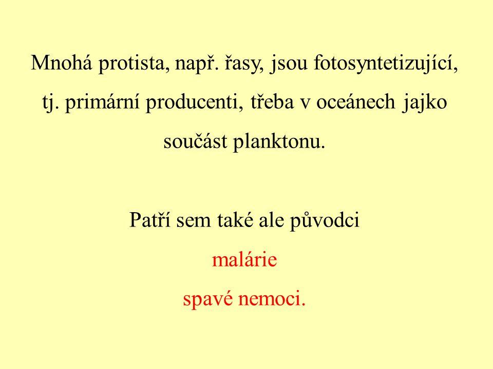 Mnohá protista, např. řasy, jsou fotosyntetizující, tj. primární producenti, třeba v oceánech jajko součást planktonu. Patří sem také ale původci malá