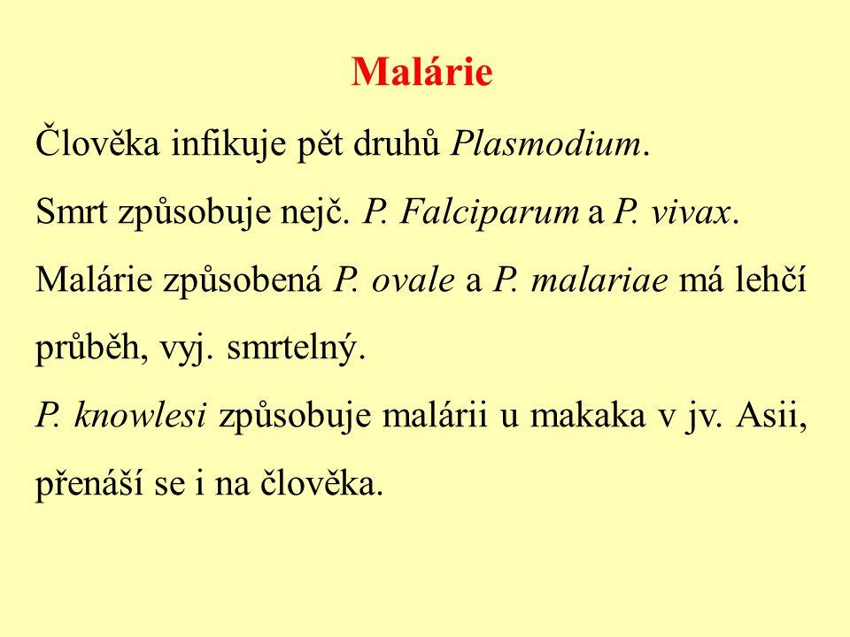 Malárie Člověka infikuje pět druhů Plasmodium. Smrt způsobuje nejč. P. Falciparum a P. vivax. Malárie způsobená P. ovale a P. malariae má lehčí průběh