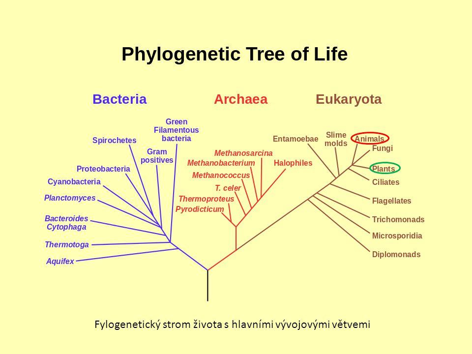 Fylogenetický strom života s hlavními vývojovými větvemi