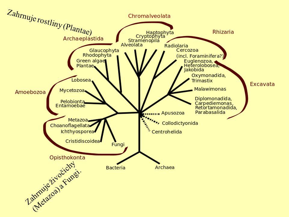 Zahrnuje živočichy (Metazoa) a Fungi. Zahrnuje rostliny (Plantae)