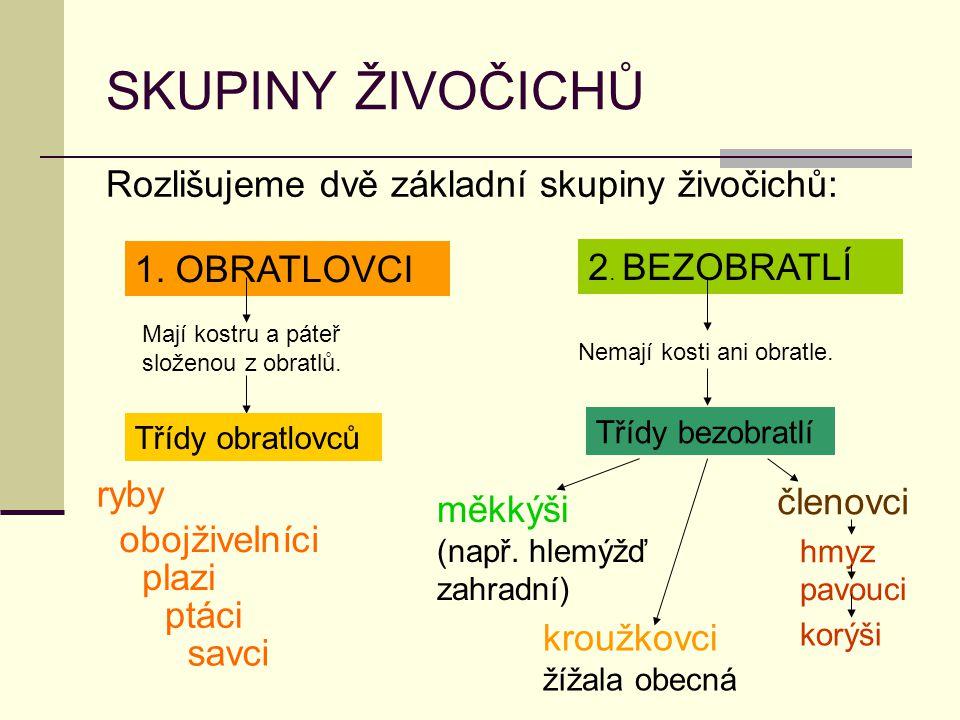 SKUPINY ŽIVOČICHŮ Rozlišujeme dvě základní skupiny živočichů: 1.