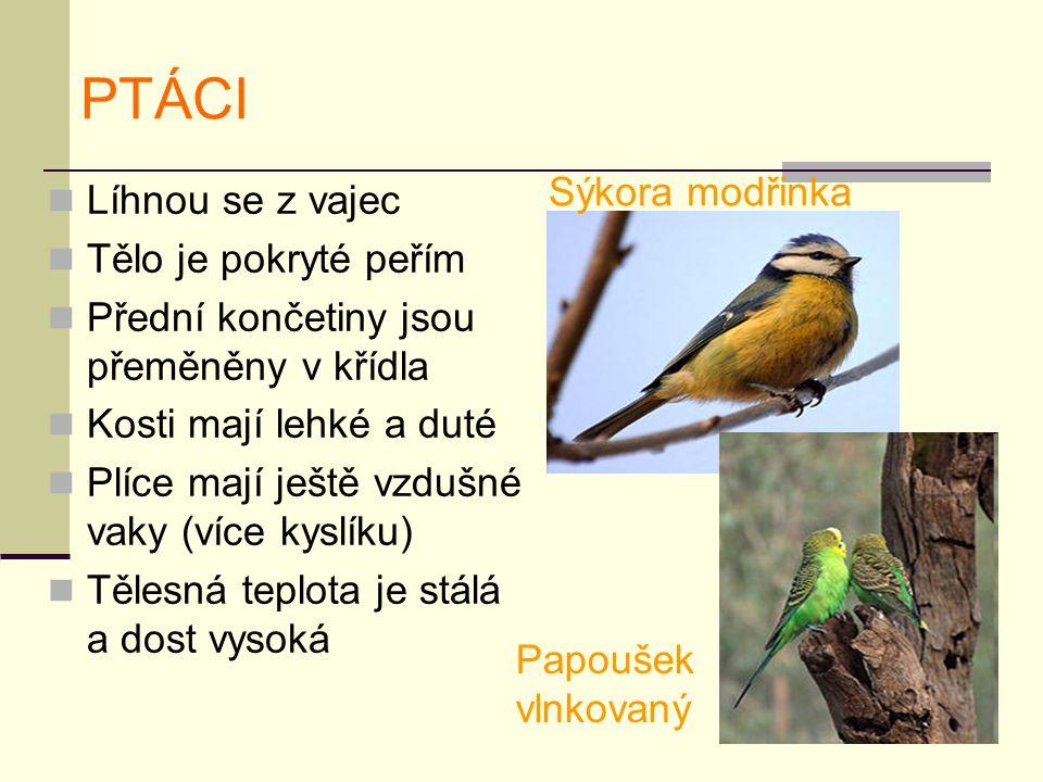 PTÁCI Líhnou se z vajec Tělo je pokryté peřím Přední končetiny jsou přeměněny v křídla Kosti mají lehké a duté Plíce mají ještě vzdušné vaky (více kyslíku) Tělesná teplota je stálá a dost vysoká Sýkora modřinka Papoušek vlnkovaný