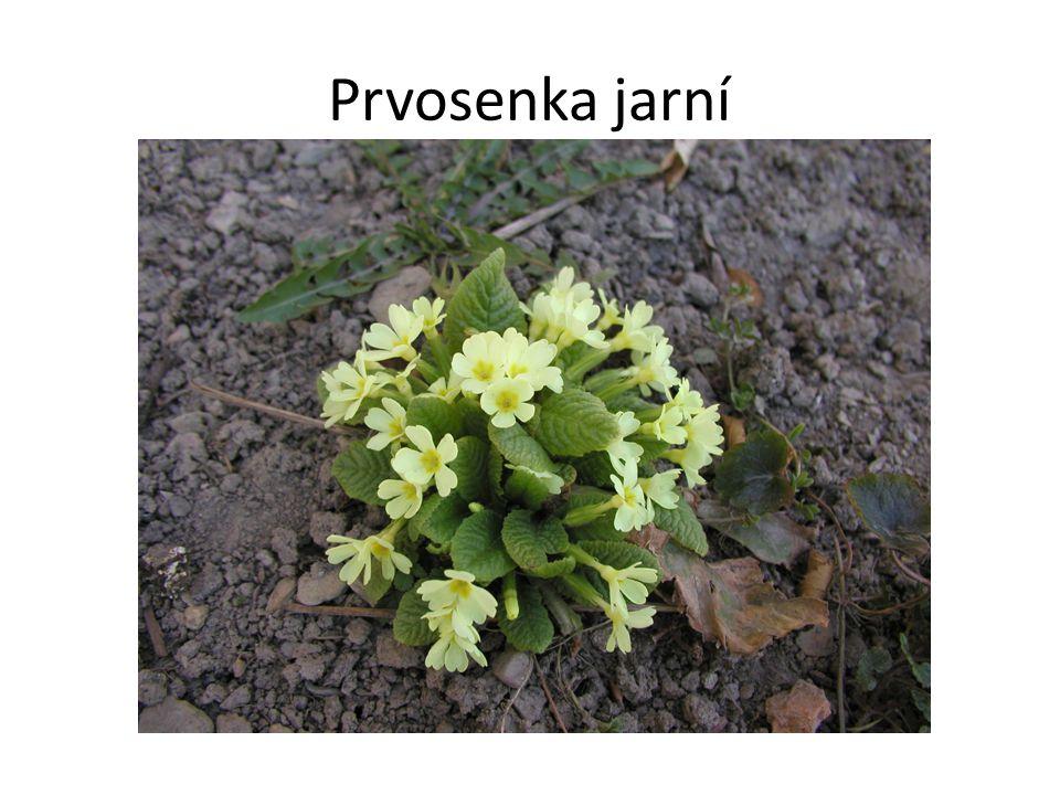 Urči názvy rostlin:
