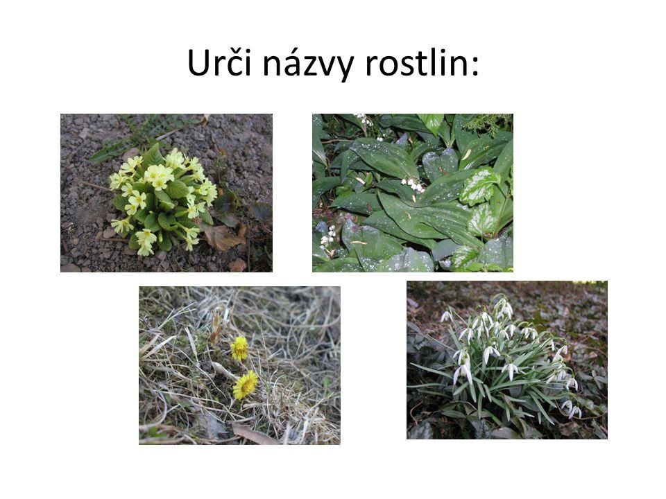 Květy jarních bylin Odstíny žluté barvy  podběl lékařský  ………………...
