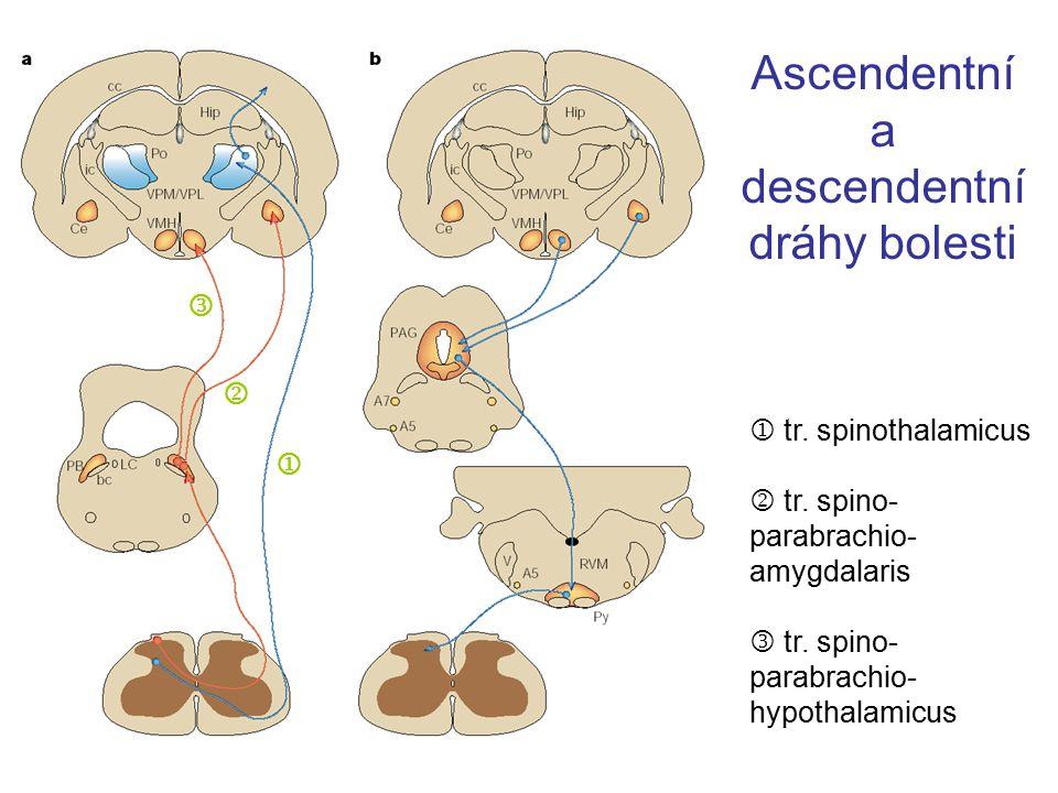 Ascendentní a descendentní dráhy bolesti  tr. spinothalamicus  tr. spino- parabrachio- amygdalaris tr. spino- parabrachio- hypothalamicus  