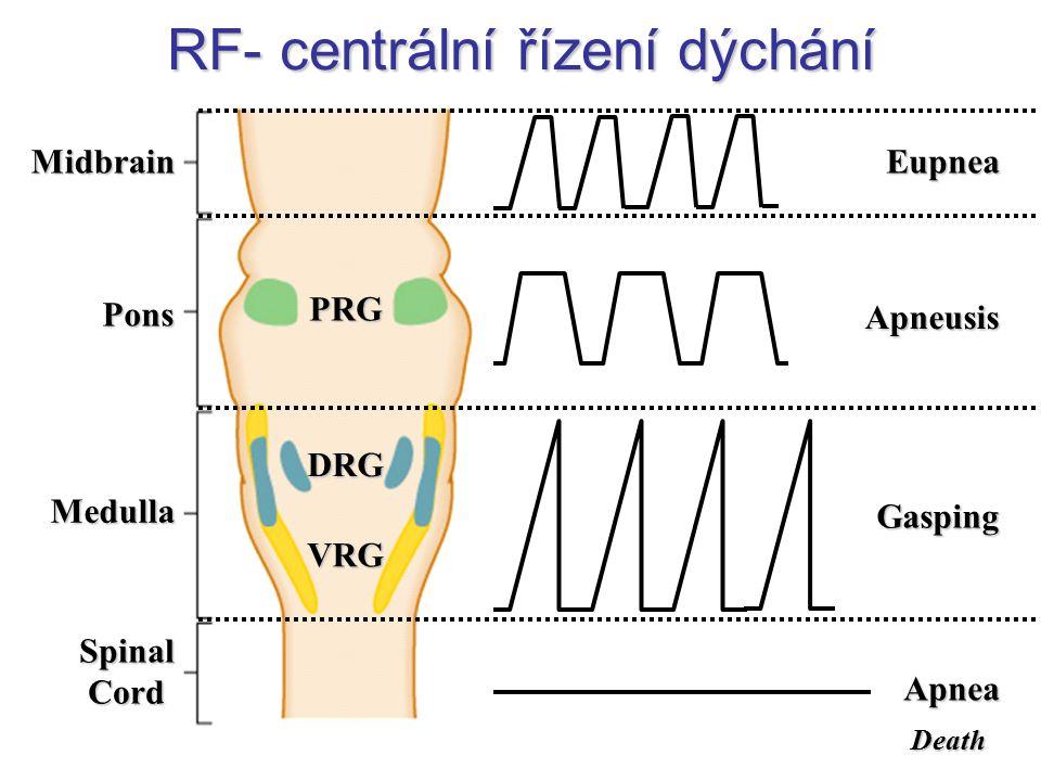 Pons Midbrain Medulla SpinalCord PRG VRG DRG Eupnea Apneusis Gasping Apnea Death RF- centrální řízení dýchání
