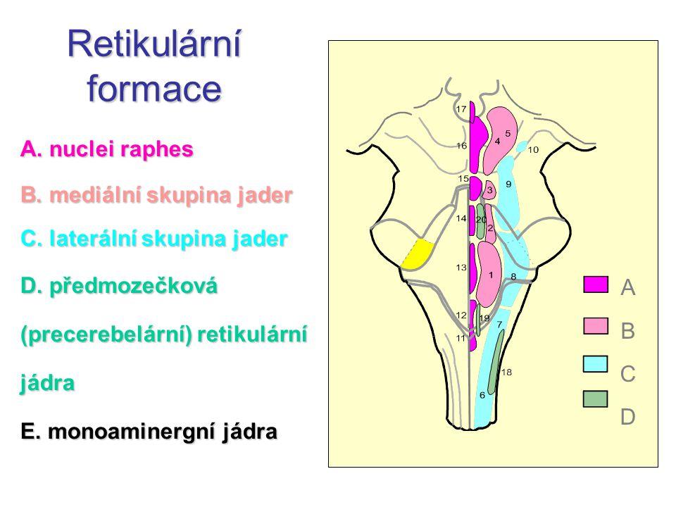 A. nuclei raphes B. mediální skupina jader C. laterální skupina jader D. předmozečková (precerebelární) retikulární jádra E. monoaminergní jádra ABCDA