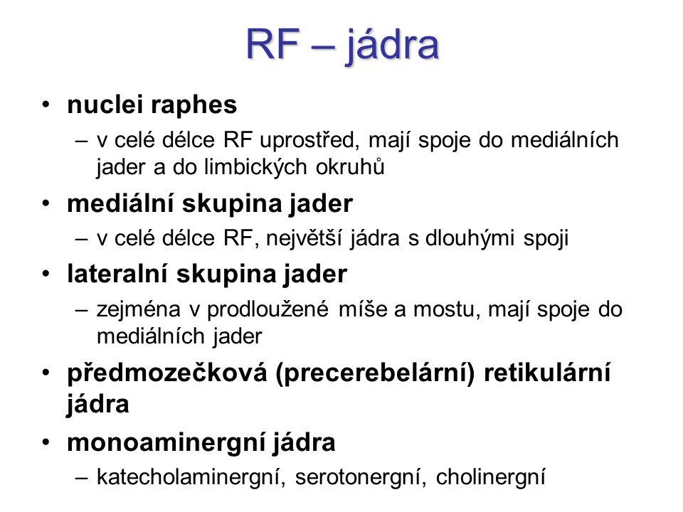 RF – celkový význam zajišťuje komplexní propojení hlavových nervů mezi sebou i s jinými oblastmi → životně důležité reflexy od narození (mrkací, slzivý, kašlací, sací, slinivý, polykací, sekreční pro žlázy …) její aktivační systém ascendentně ovlivňuje kůru, descendentně míchu inhibiční systém umístěny hlavně v kaudálních a ventrálních částech RF a v serotonergních jádrech ascendentně ovlivňuje kůru, descendentně míchu bolest