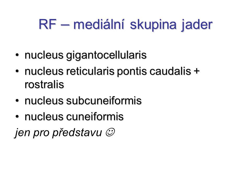 RF – laterální skupina jader nuclei parabrachialesnuclei parabrachiales –dýchání, chuť nucleus reticularis centralisnucleus reticularis centralis nucleus reticularis parvocellualrisnucleus reticularis parvocellualris nucleus reticular lateralisnucleus reticular lateralis nucleus tegmentalis pedunculopontinusnucleus tegmentalis pedunculopontinus nucleus parapeduncularisnucleus parapeduncularis jen pro představu