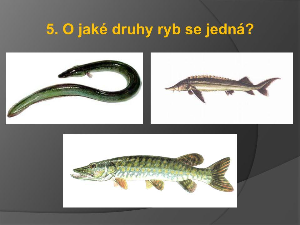 5. O jaké druhy ryb se jedná?