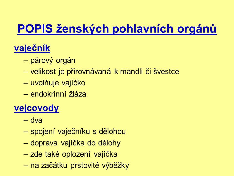 POPIS ženských pohlavních orgánů vaječník –párový orgán –velikost je přirovnávaná k mandli či švestce –uvolňuje vajíčko –endokrinní žláza vejcovody –d