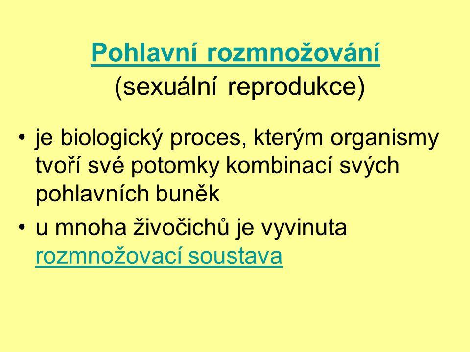 Pohlavní rozmnožování Pohlavní rozmnožování (sexuální reprodukce) je biologický proces, kterým organismy tvoří své potomky kombinací svých pohlavních buněk u mnoha živočichů je vyvinuta rozmnožovací soustava rozmnožovací soustava
