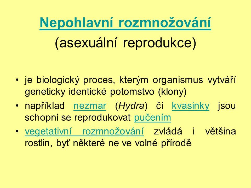 Nepohlavní rozmnožování Nepohlavní rozmnožování (asexuální reprodukce) je biologický proces, kterým organismus vytváří geneticky identické potomstvo (