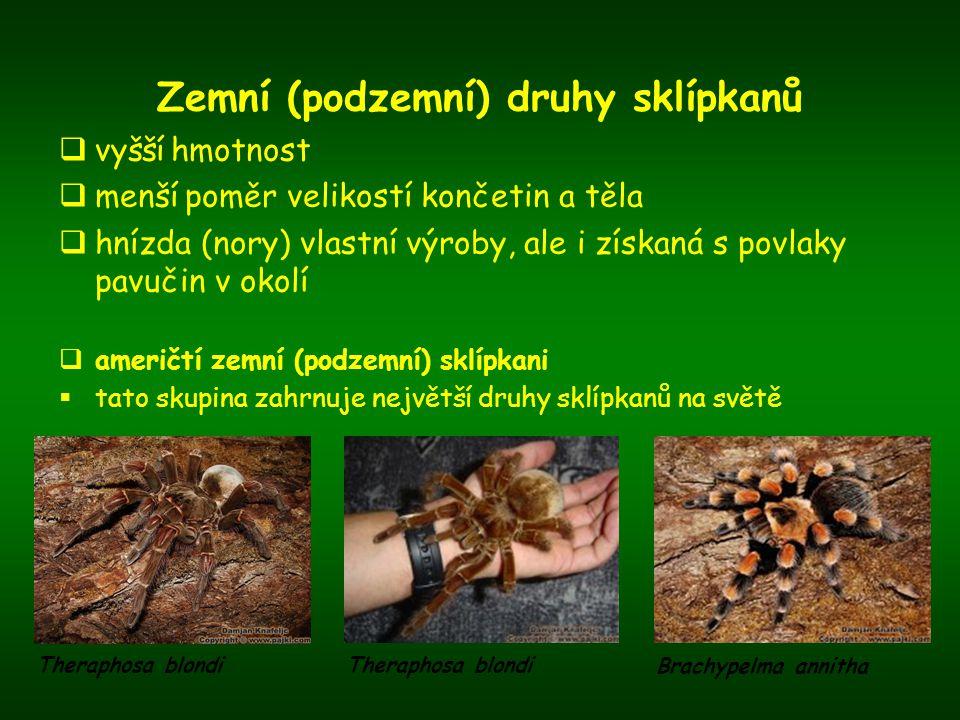 Zemní (podzemní) druhy sklípkanů  vyšší hmotnost  menší poměr velikostí končetin a těla  hnízda (nory) vlastní výroby, ale i získaná s povlaky pavu