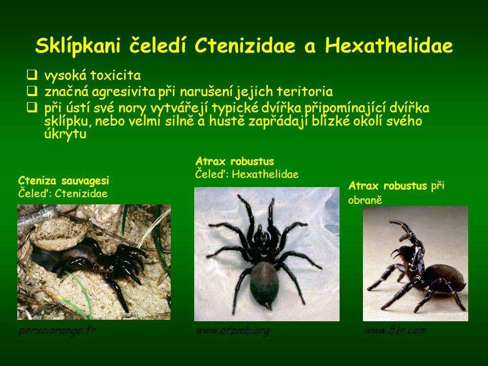 Sklípkani čeledí Ctenizidae a Hexathelidae  vysoká toxicita  značná agresivita při narušení jejich teritoria  při ústí své nory vytvářejí typické d