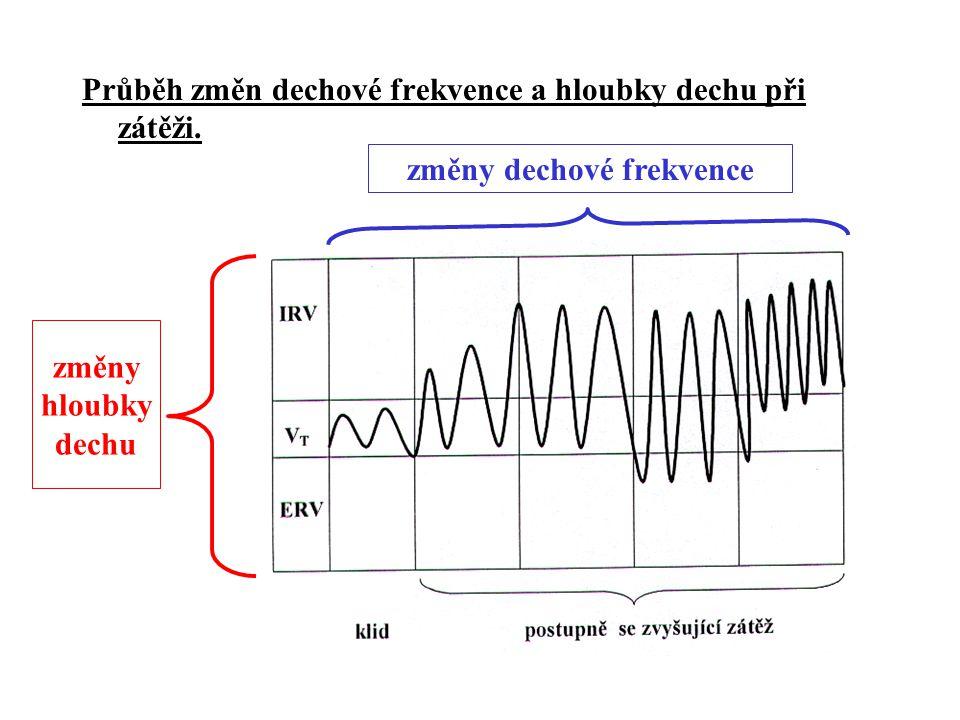 Průběh změn dechové frekvence a hloubky dechu při zátěži. změny hloubky dechu změny dechové frekvence