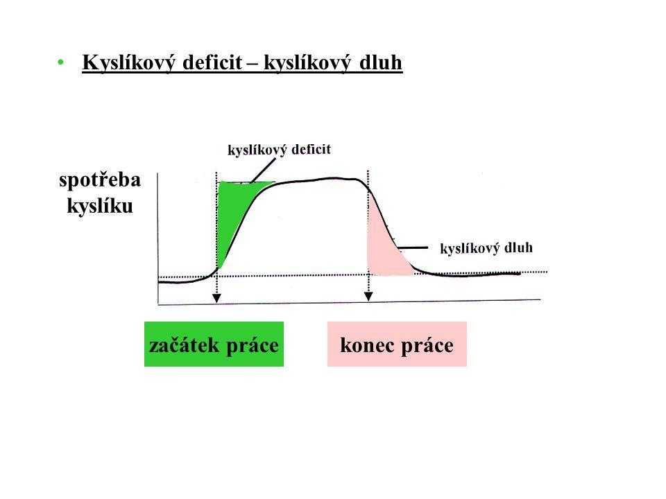 Kyslíkový deficit – kyslíkový dluh začátek prácekonec práce spotřeba kyslíku