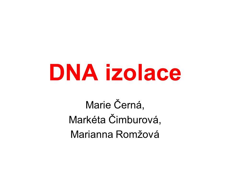 DNA izolace Základní kroky Lýze buněk Odstranění proteinů - proteáza - adsorpce nebo extrakce Precipitace DNA etanolem Rozpuštění DNA ve vodě či v pufru