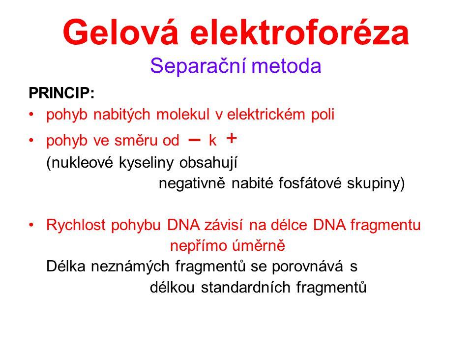 Gelová elektroforéza Separační metoda PRINCIP: pohyb nabitých molekul v elektrickém poli pohyb ve směru od – k + (nukleové kyseliny obsahují negativně