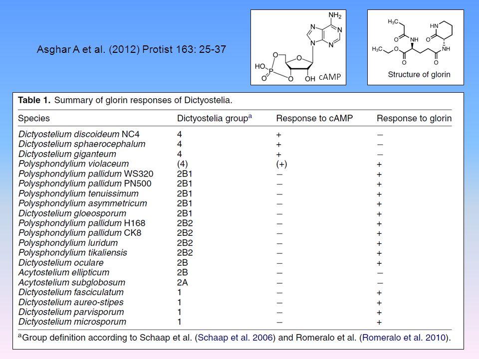 Asghar A et al. (2012) Protist 163: 25-37 cAMP