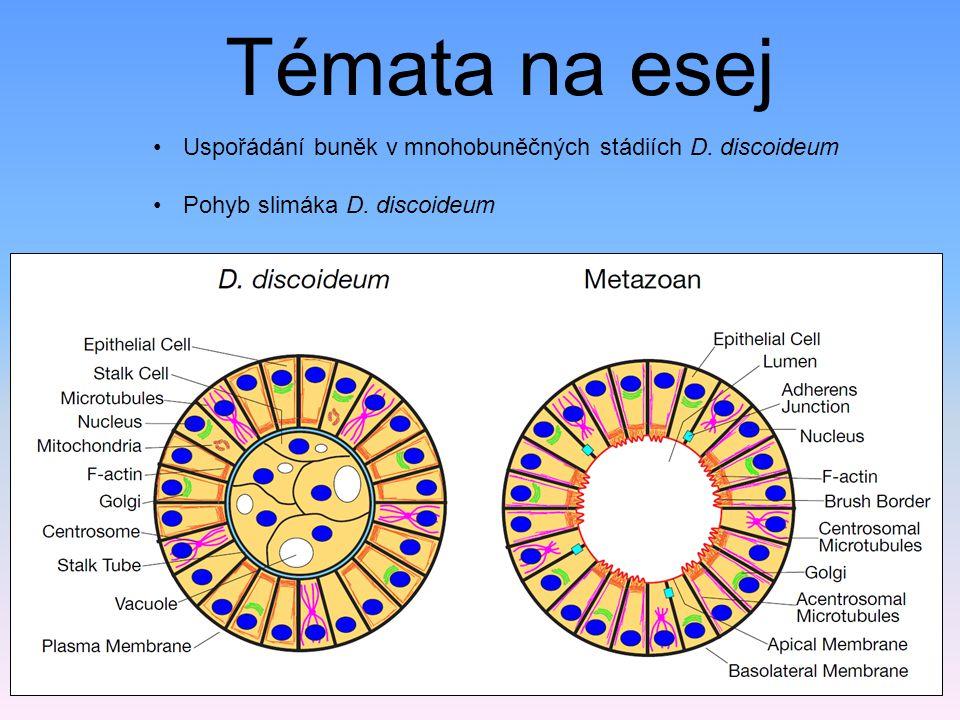Témata na esej Uspořádání buněk v mnohobuněčných stádiích D. discoideum Pohyb slimáka D. discoideum