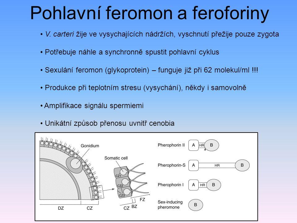 Pohlavní feromon a feroforiny V.