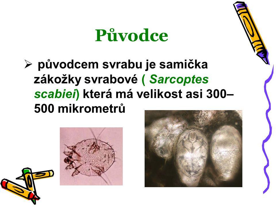 Původce  původcem svrabu je samička zákožky svrabové ( Sarcoptes scabiei) která má velikost asi 300– 500 mikrometrů