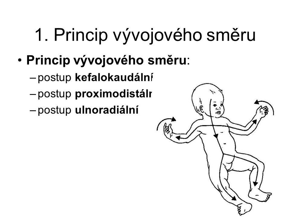 1. Princip vývojového směru Princip vývojového směru: –postup kefalokaudální –postup proximodistální –postup ulnoradiální
