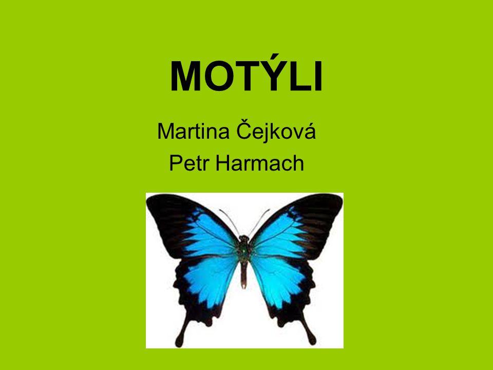 MOTÝLI Martina Čejková Petr Harmach