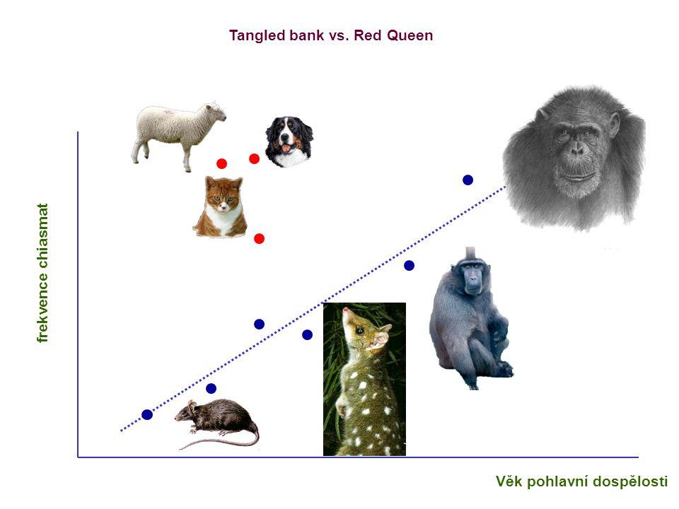 Věk pohlavní dospělosti frekvence chiasmat Tangled bank vs. Red Queen