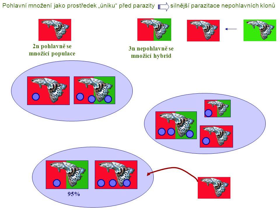 """3n nepohlavně se množící hybrid 2n pohlavně se množící populace 95% Pohlavní množení jako prostředek """"úniku před parazitysilnější parazitace nepohlavních klonů"""