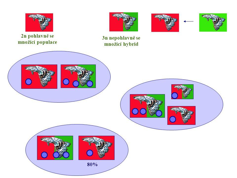 3n nepohlavně se množící hybrid 2n pohlavně se množící populace 80%