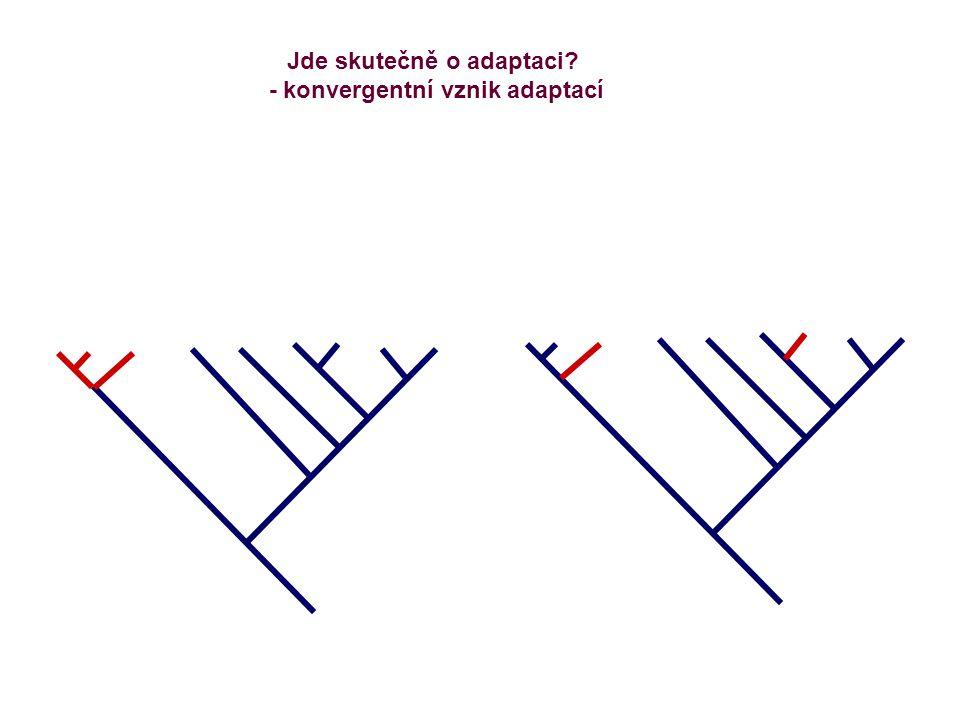 Jde skutečně o adaptaci? - konvergentní vznik adaptací