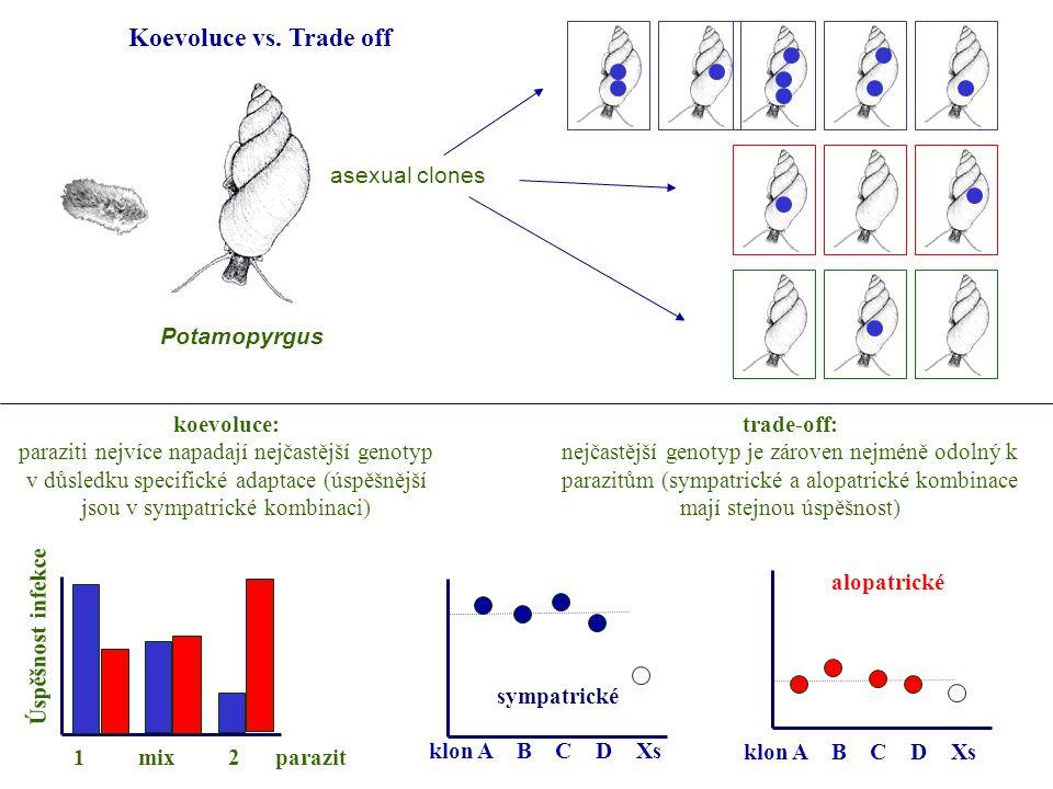 asexual clones Potamopyrgus koevoluce: paraziti nejvíce napadají nejčastější genotyp v důsledku specifické adaptace (úspěšnější jsou v sympatrické kombinaci) trade-off: nejčastější genotyp je zároven nejméně odolný k parazitům (sympatrické a alopatrické kombinace mají stejnou úspěšnost) Úspěšnost infekce 1 mix 2 parazit sympatrické klon A B C D Xs alopatrické klon A B C D Xs Koevoluce vs.