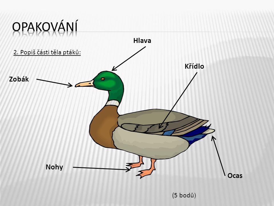 2. Popiš části těla ptáků: Zobák Hlava Křídlo Nohy Ocas (5 bodů )