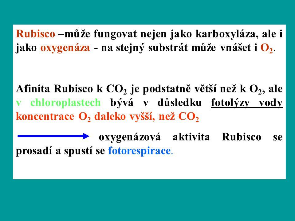 Rubisco –může fungovat nejen jako karboxyláza, ale i jako oxygenáza - na stejný substrát může vnášet i O 2. Afinita Rubisco k CO 2 je podstatně větší