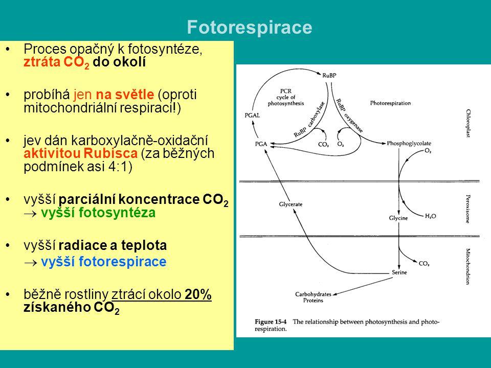 Fotorespirace Proces opačný k fotosyntéze, ztráta CO 2 do okolí probíhá jen na světle (oproti mitochondriální respiraci!) jev dán karboxylačně-oxidačn