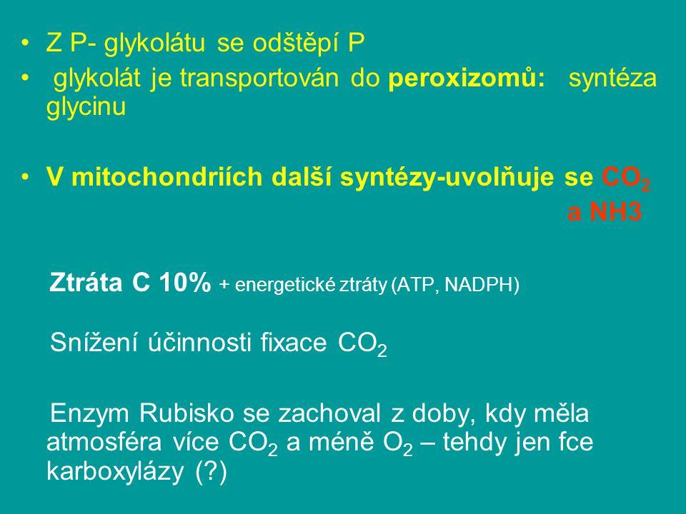 Z P- glykolátu se odštěpí P glykolát je transportován do peroxizomů: syntéza glycinu V mitochondriích další syntézy-uvolňuje se CO 2 a NH3 Ztráta C 10