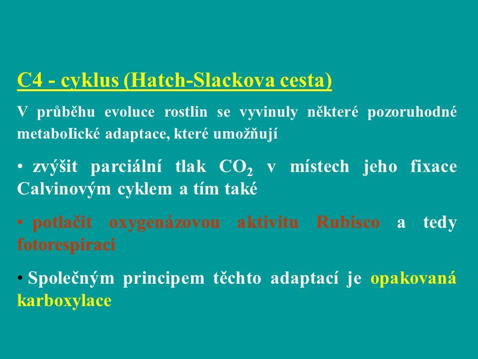 C4 - cyklus (Hatch-Slackova cesta) V průběhu evoluce rostlin se vyvinuly některé pozoruhodné metaboIické adaptace, které umožňují zvýšit parciální tla