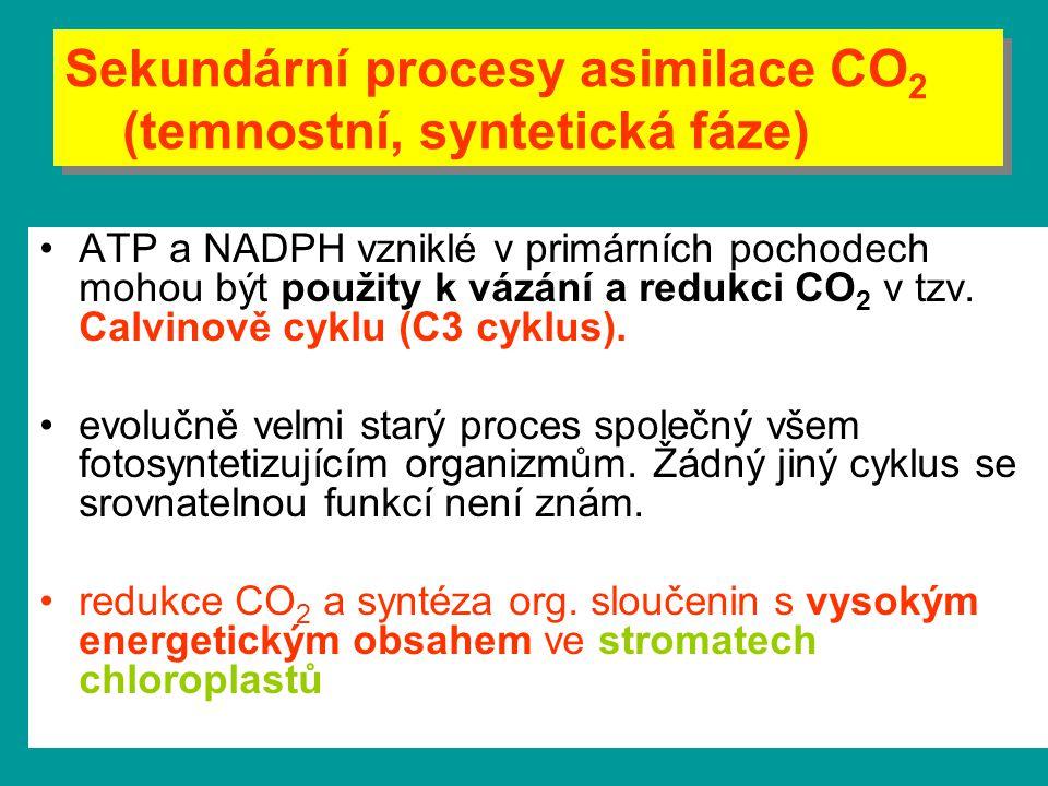 ATP a NADPH vzniklé v primárních pochodech mohou být použity k vázání a redukci CO 2 v tzv. Calvinově cyklu (C3 cyklus). evolučně velmi starý proces s
