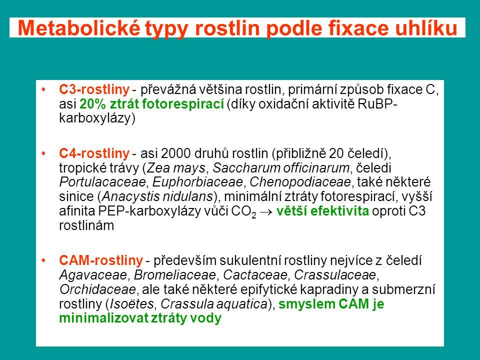 Metabolické typy rostlin podle fixace uhlíku C3-rostliny - převážná většina rostlin, primární způsob fixace C, asi 20% ztrát fotorespirací (díky oxida