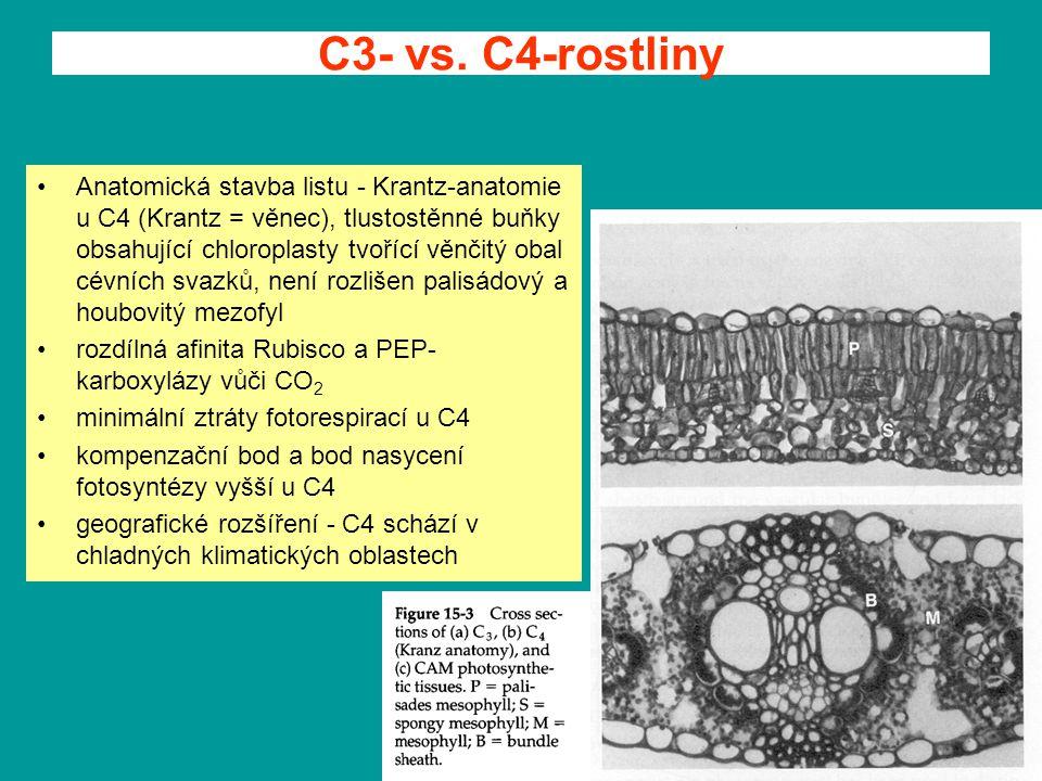 C3- vs. C4-rostliny Anatomická stavba listu - Krantz-anatomie u C4 (Krantz = věnec), tlustostěnné buňky obsahující chloroplasty tvořící věnčitý obal c
