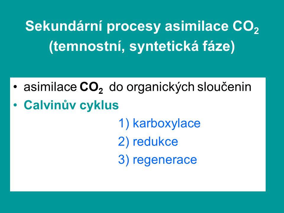 asimilace CO 2 do organických sloučenin Calvinův cyklus 1) karboxylace 2) redukce 3) regenerace
